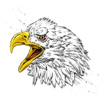 Schöner adler raubvogel