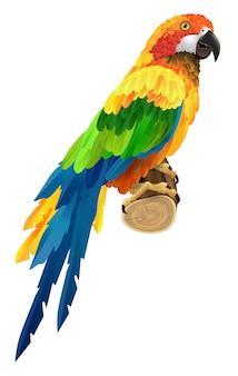 Schöner bunter papagei auf zweig. vogel, fauna, tierwelt. tropen konzept.