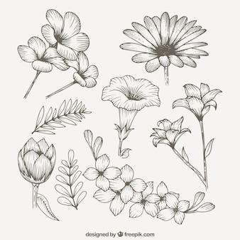 Schöner frühling wildblumen
