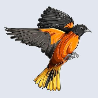 Schöner goldener baltimore pirol vogel fliegender gezeichneter pirol lokalisiert