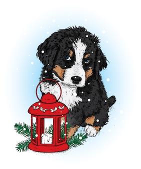 Schöner hund mit einer weihnachtslaterne