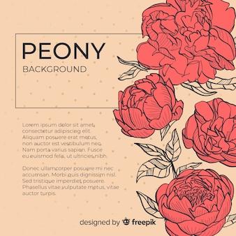 Schöner pfingstrosenblumenhintergrund