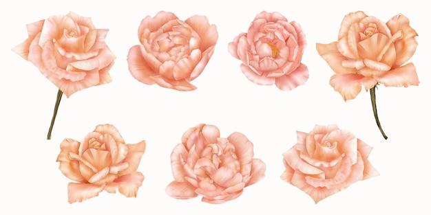 Schöner satz von rosa und orange rosen