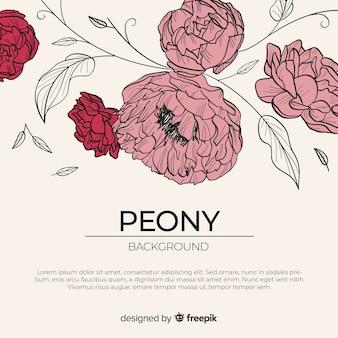 Schöner und eleganter pfingstrosenblumenhintergrund