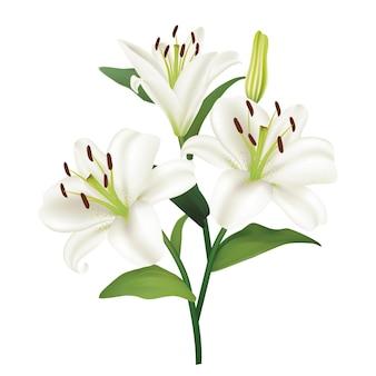 Schöner weißer lilie blüht boquet