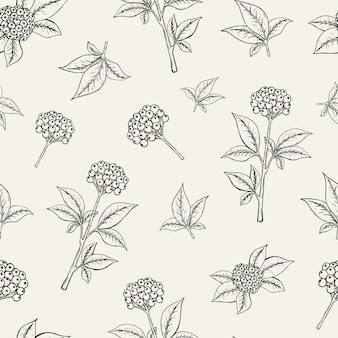 Schönes nahtloses botanisches muster mit ginsengbeeren, die auf stiel mit blättern auf weißem hintergrund wachsen.