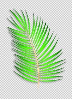 Schönes naturalistisches palmblatt auf transparentem hintergrund. vektor-illustration. eps10