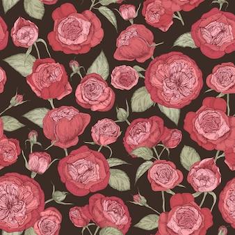 Schönes romantisches nahtloses muster mit blühenden austin-rosen auf schwarzem hintergrund.