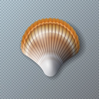 Schönes shell getrennt auf transparentem