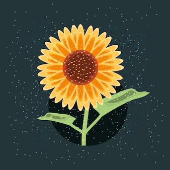 Schönes sonnenblumen design