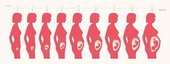Schwangerschaft Prozessdesign