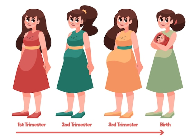 Schwangerschaftsstadien dargestellt