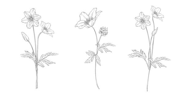Schwarz-weiß-blumenkomposition mit anemonenblüten