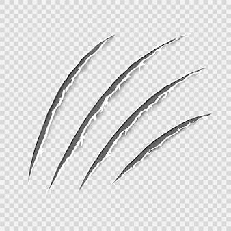 Schwarze krallen tierkratzspur. katzentiger kratzt an der pfotenform. vier nägel verfolgen. lustiges gestaltungselement. beschädigtes tuch. ausgefranste kanten. transparenter hintergrund. isoliert. vektor-illustration