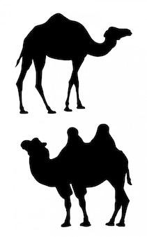 Schwarze schattenbilder von zwei kamelen auf einem weißen hintergrund.