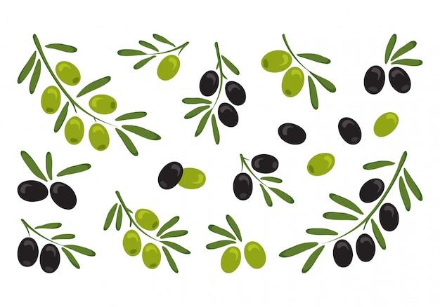 Schwarze und grüne oliven, zweigoliven mit blättern. vektorillustration