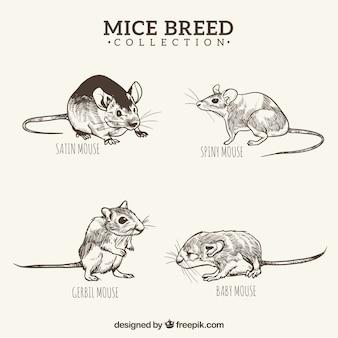 Schwarze und weiße hand gezeichnete mäuse züchten satz