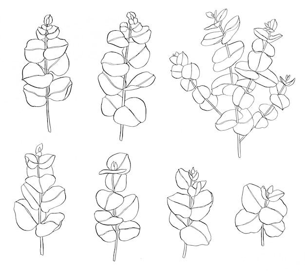 Schwarzer satz von eukalyptusblättern zweig. floristische elemente für die floristik. hand gezeichnete illustration.