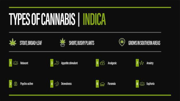 Schwarzes informationsplakat von cannabisarten mit infografik. indica