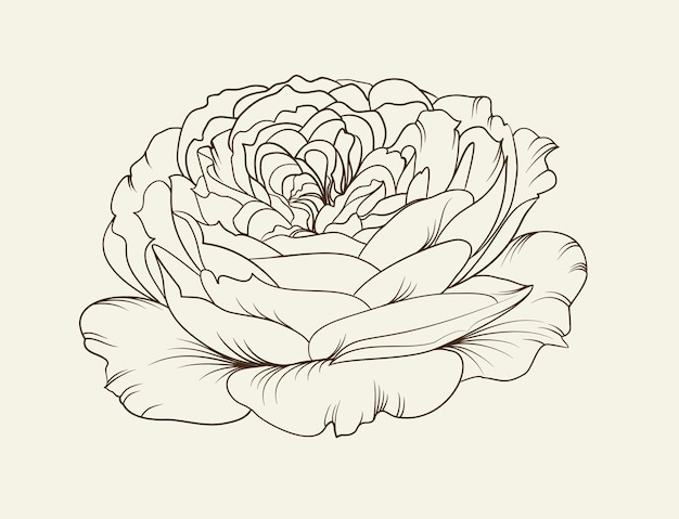 Schwarzweiss-blumenrose.