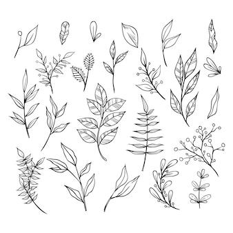 Schwarzweiss-hand gezeichnete blumenverzierungs-sammlung mit niederlassungen und blättern. dekorative elemente für die dekoration