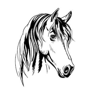 Schwarzweiss-pferdeporträt