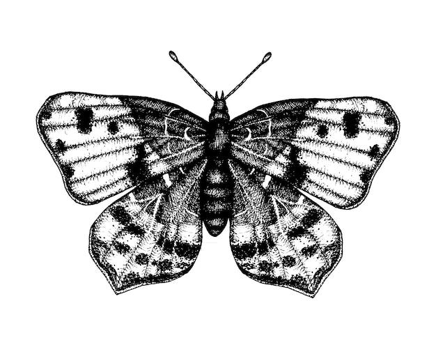 Schwarzweiss-vektorillustration eines schmetterlinges. hand gezeichnete insektenskizze. ausführliche grafikzeichnung des wandbrauns in der weinleseart.