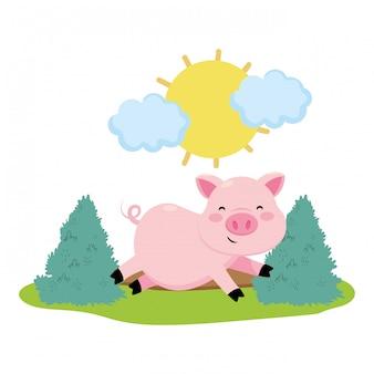 Schwein in der farm