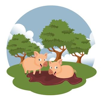 Schweine in der farmszene