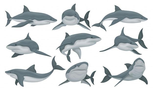 Schwimmender hai-satz, meerestierfisch-illustration auf einem weißen hintergrund