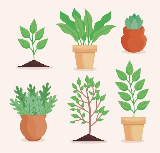 Sechs pflanzpflanzen