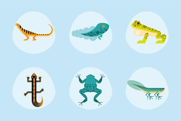 Sechs süße amphibien