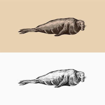 Seeelefant meerestiere seetier oder flossenfüßer vintage retro-schilder doodle-stil hand