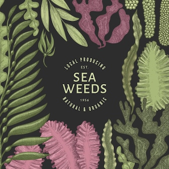 Seetang farbdesign vorlage. hand gezeichnete algenillustrationen auf dunklem hintergrund. gravierte meeresfrüchte. retro meer pflanzen hintergrund