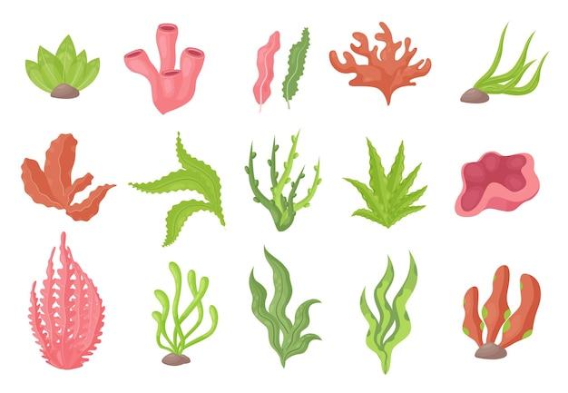 Seetang-unterwasserpflanzen vom meeresboden oder aquarium setzen seetang oder meeresalgenkorallen