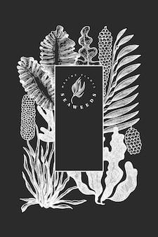 Seetang vorlage. hand gezeichnete seetangillustration auf kreidetafel. gravierte art meeresfrüchte banner. vintage meer pflanzen hintergrund