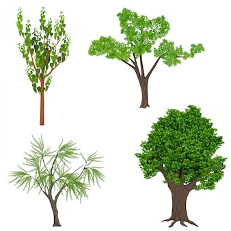 Sehr detaillierte realistische bäume gesetzt