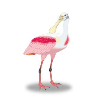 Seltsamer vogel mit einem großen schnabel