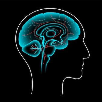 Serotoninweg im menschlichen gehirn. monoamin-neurotransmitter. modulierender flacher vektor der stimmung.