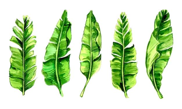 Set aus grünem bananenbaumblatt-aquarell-design