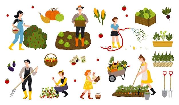 Set aus lokaler ökologischer produktion landarbeiter beim pflanzen und sammeln von getreide garten