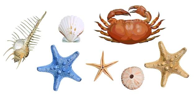 Set aus muscheln, seesternen und krabben