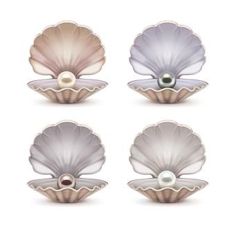 Set aus offener schale mit beigen, grauen, braunen und weißen perlen im inneren. schablone der geöffneten muscheln lokalisiert auf hintergrund