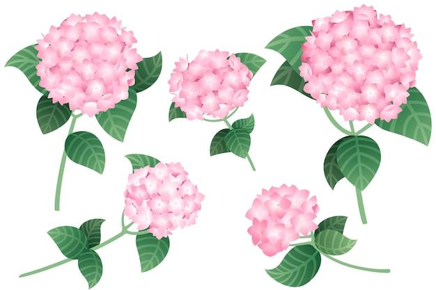 Set aus rosa hortensienblüten mit grünen stielen und blättern, flache vektorgrafiken