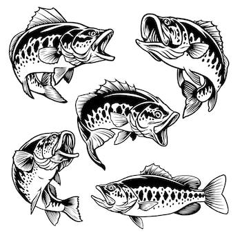 Set aus schwarz und weiß von forellenbarschfischen