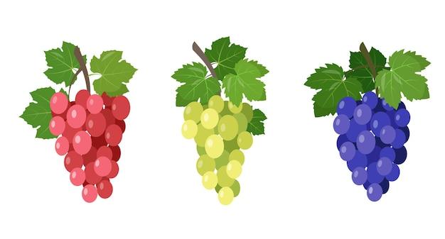 Set aus verschiedenen weingrünen trauben, schwarzen und roten, rosa muskatellertraubenzweigen mit blättern