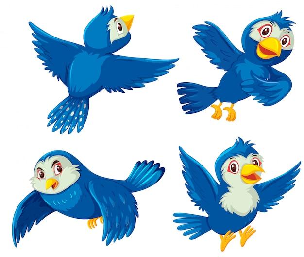 Set blaue vögel