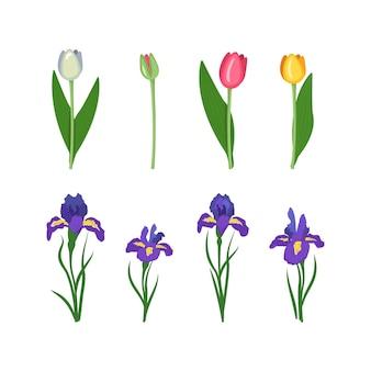 Set blumen iris und tulpen helle frühlings- und sommerblumen mit grünen blättern