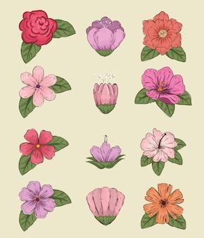 Set blumen pflanzen mit blättern und blütenblättern stil
