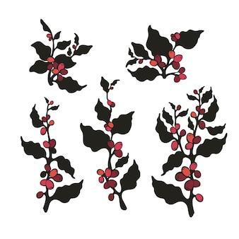 Set botanical kaffeebaum bohnen getreide beeren isolat